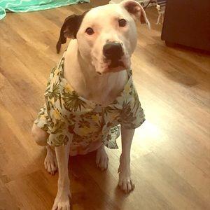Dog Aloha Shirt